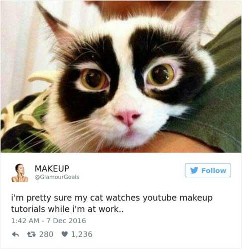 cat tweets 12