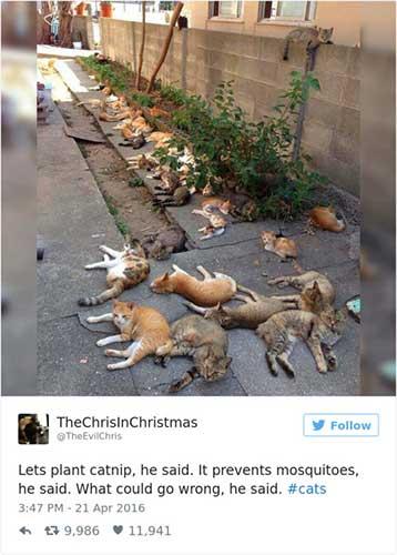 cat tweets 2