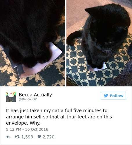 cat tweets 4