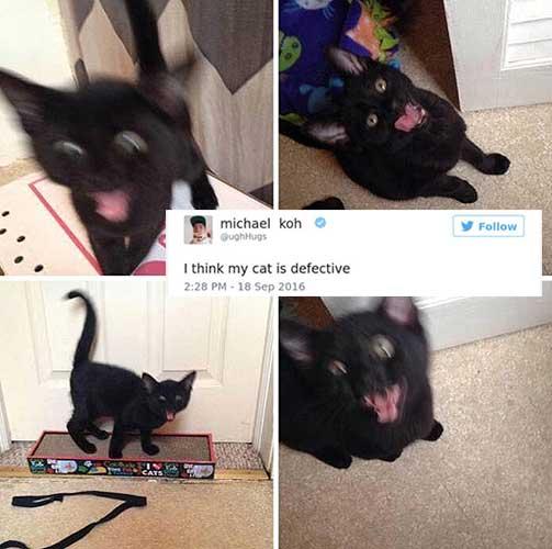 cat tweets 6