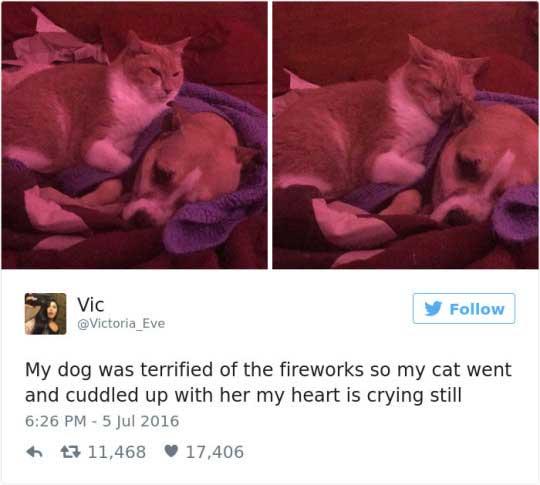 cat tweets 9