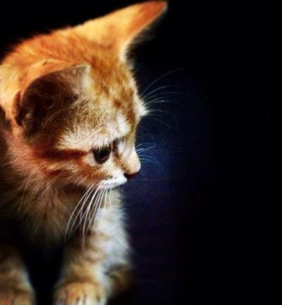 caught kitty eye