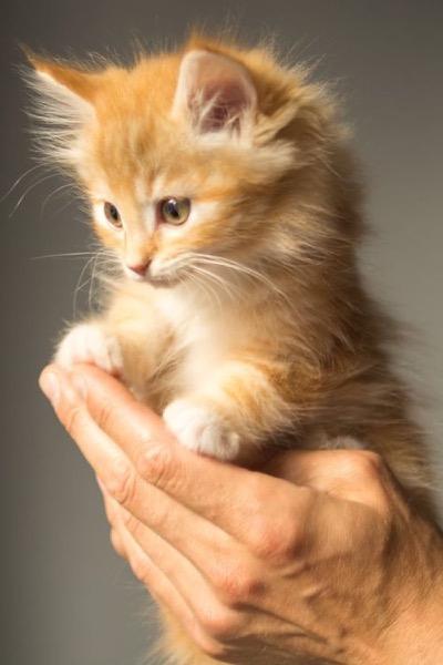 cute ginger hand