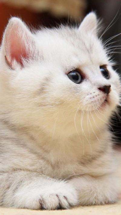 cute white head