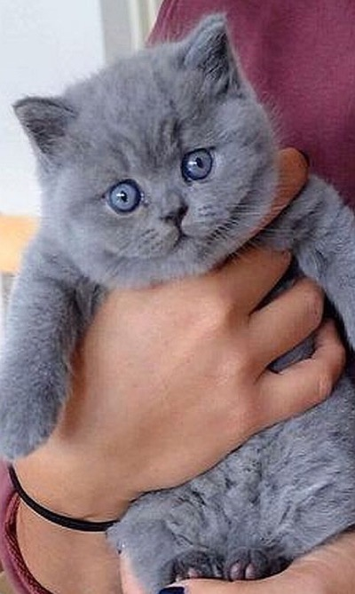too cute grey