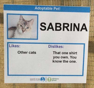 cat cards 11