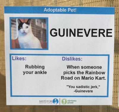 cat cards 12
