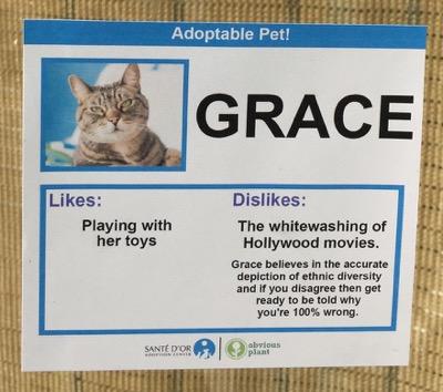cat cards 13