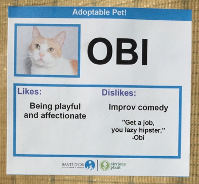 cat cards 14