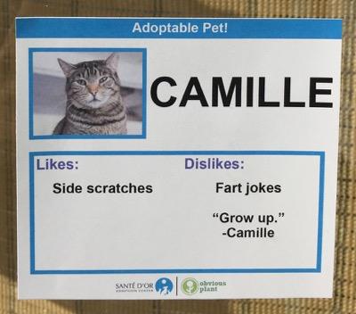 cat cards 3