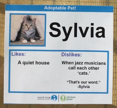 cat cards 7