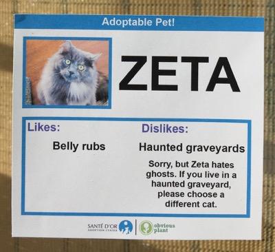 cat cards 8