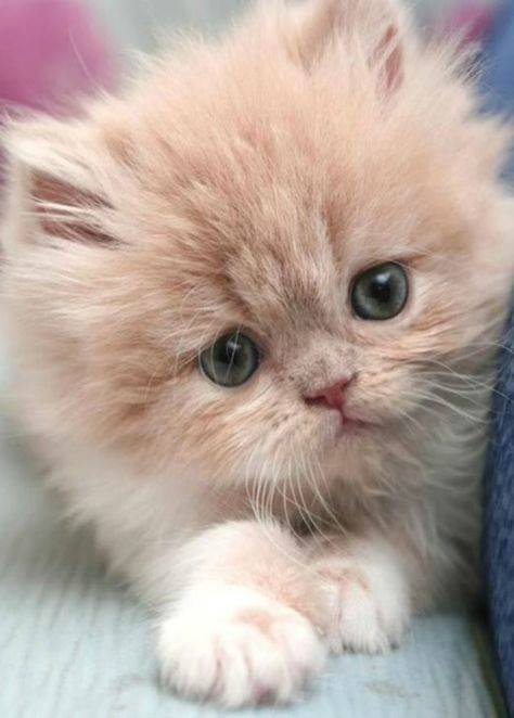 cute kitten really cat kittens cats adorable cutest baby sweet 27th february fabulous kitty pretty too fluffy fur katze animal