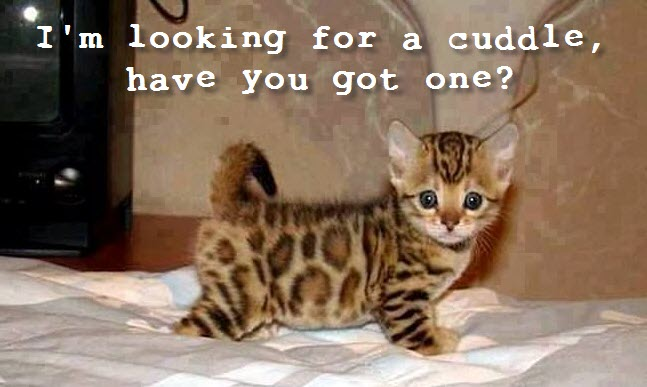 looking for a cuddle