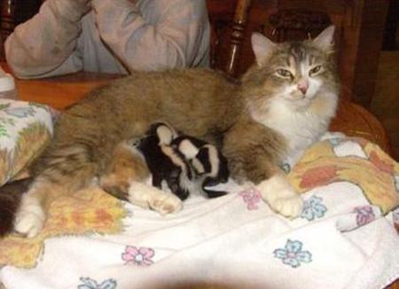 kitten name generator