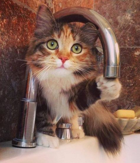 turn on the tap