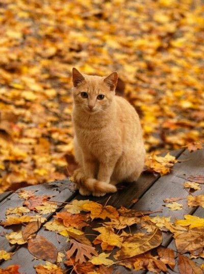 Autumn-kitty