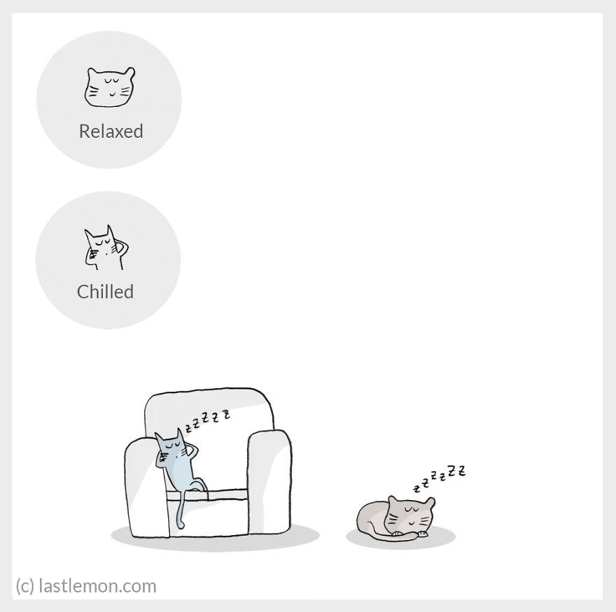 cat moods 1