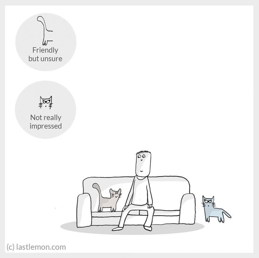 cat moods 10