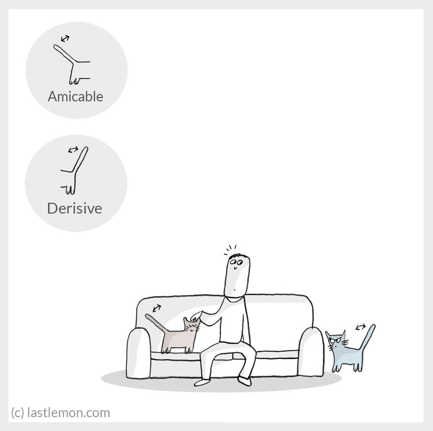 cat moods 12