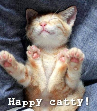 happy catty