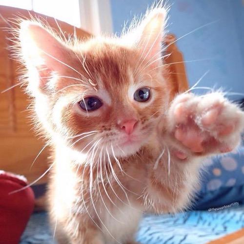 cute high 5