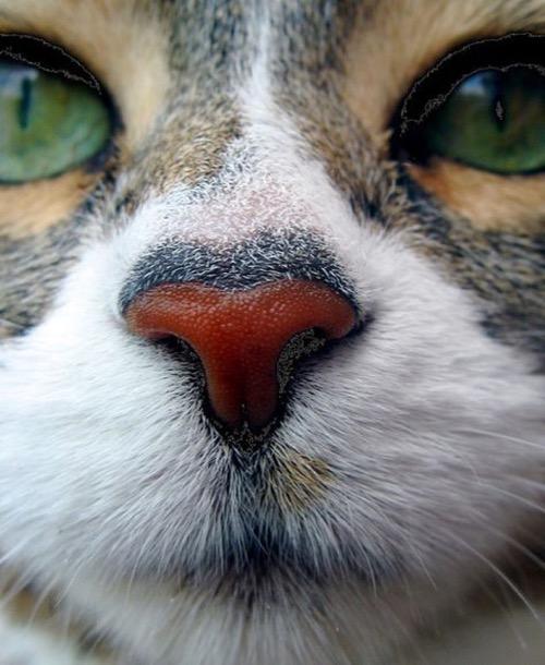 cute nose