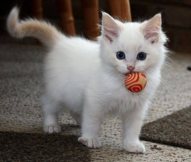 Do you like my ball?..........let's play!