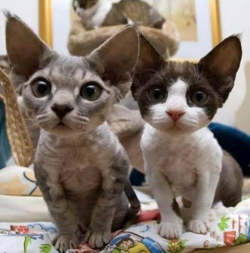 Cats or bats