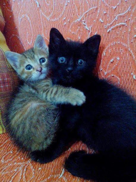 Totally adorable!