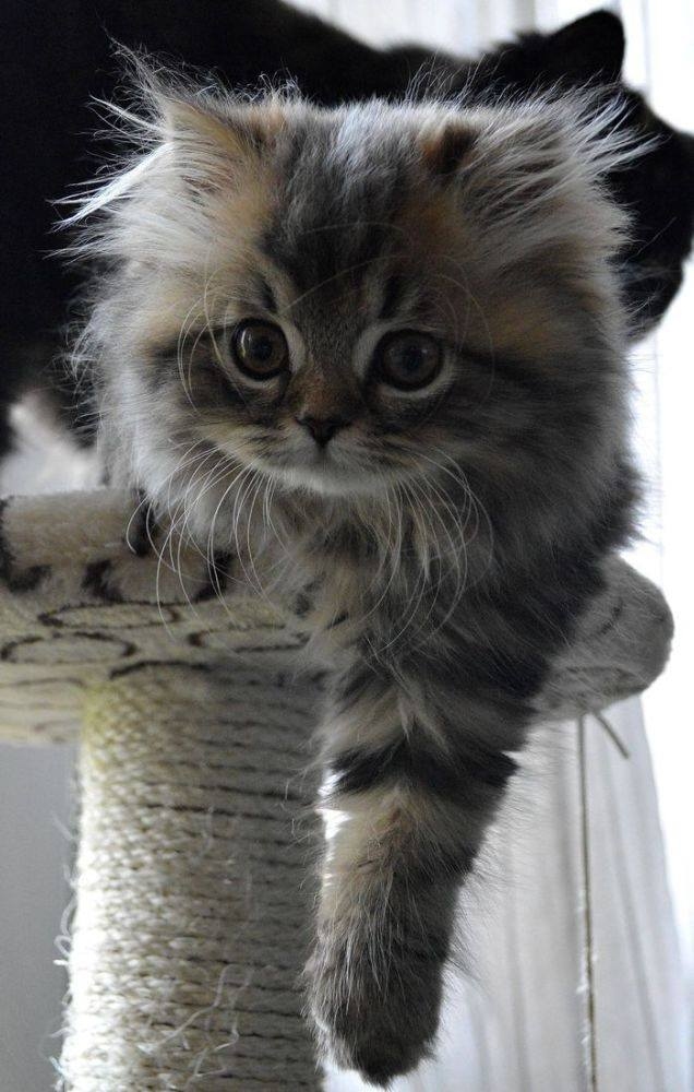 extremely cute kitten
