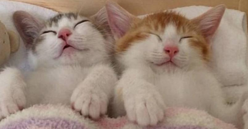 Adorable Kitten Twins Love To Sleep Side By Side