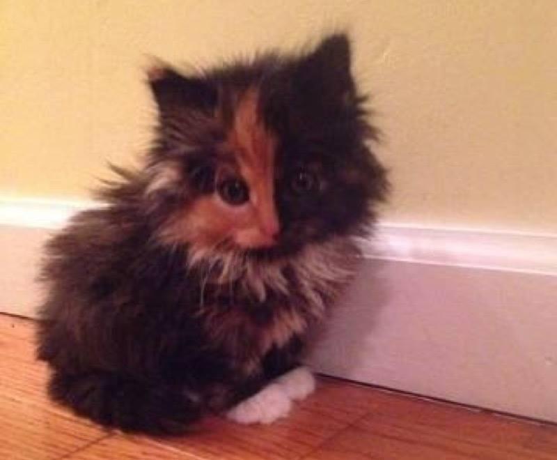 Cute kitten alert
