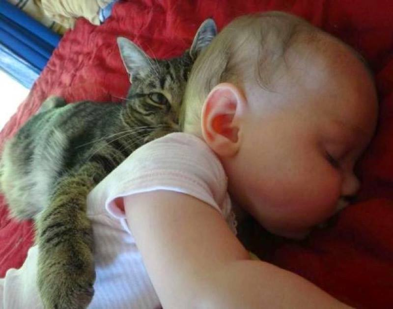 I shall protect you tiny human