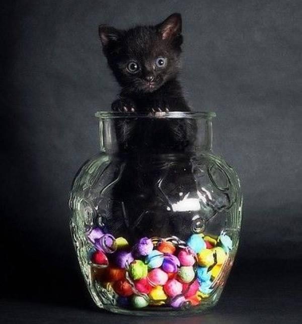 sweetie jar!