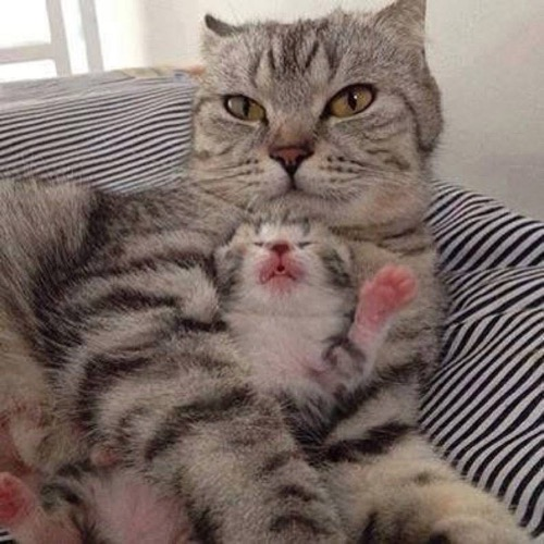 Another great mama and baby picture