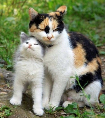 Mama and kitten love...