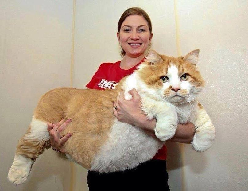OMG! Is this #cat for real?