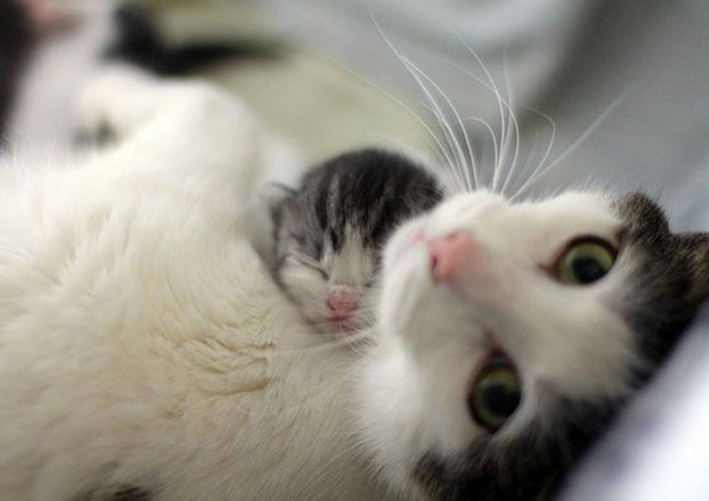 Please don't wake my baby