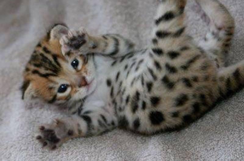 Soft kitty, warm kitty