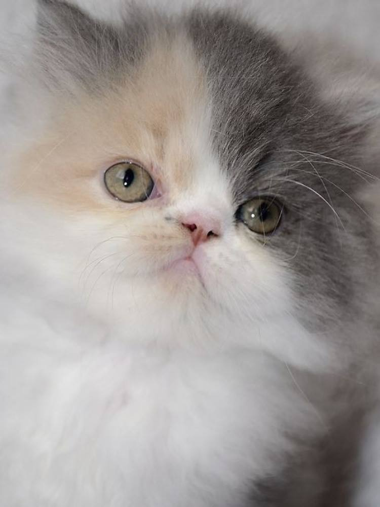 What a lovely face on this little kitten