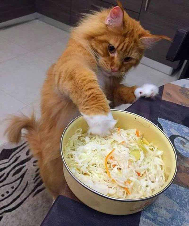 _a-cat-caught-in-the-act