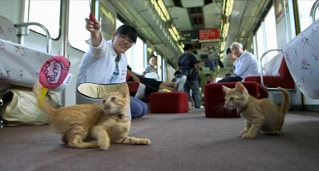 cat cafe train