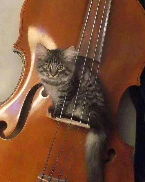 """Hey diddle diddle, the cat and the fiddle!"""