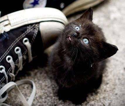 A beautiful hipster's kitten