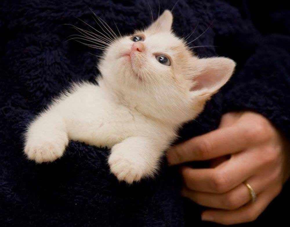 I loves me a pocket kitten