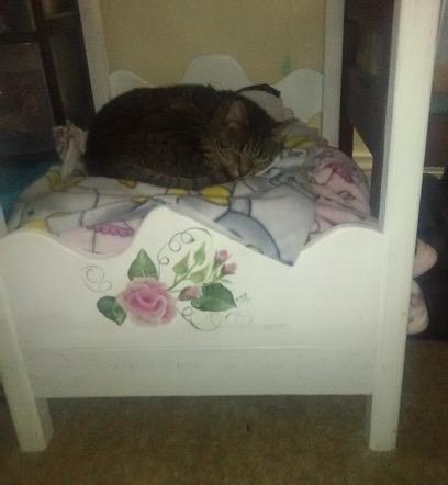 Katt No