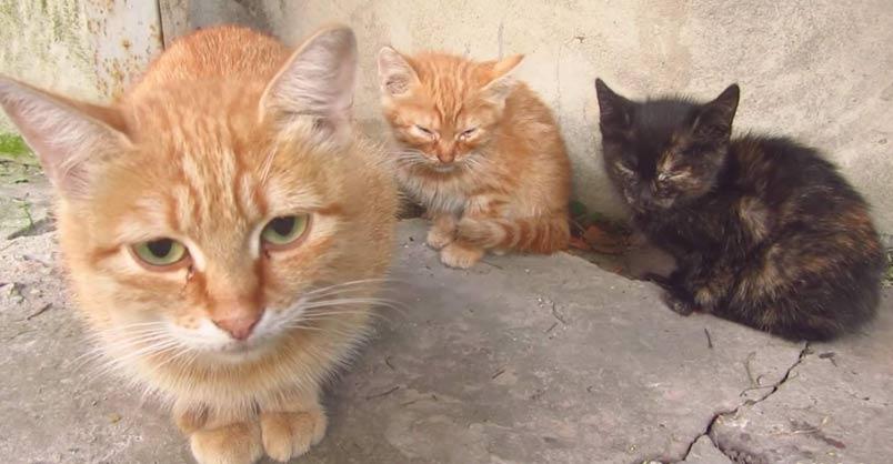 crazed cat battle cats