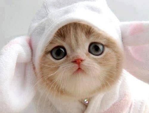 cat or rabbit