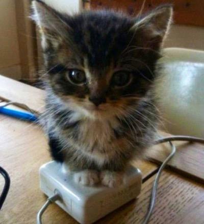 perfect kitten warmer!
